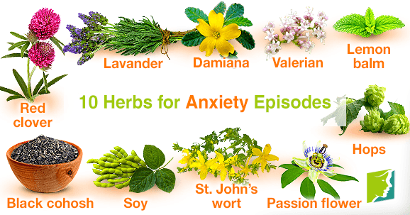 10 Herbs for Anxiety Episodes