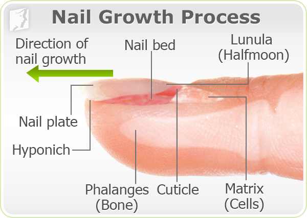 Brittle Nails Symptom Information