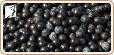 Acai Berries to Treat Menopausal Symptoms2