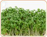 Eating Watercress to Help Prevent your Menopausal Bloating