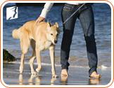 Can Walking Your Dog Help Curb Menopausal Weight Gain?3