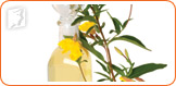 Evening primrose is a source of important omega-3 fatty acids.