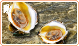 How will oysters help increase my libido during menopause?