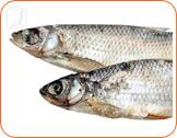 Fish: foods that contain fatty acids help alleviate muscle tension