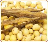 Menopausal Relief: Organic vs. Non-Organic Soybeans1