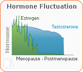 Estrogen production is greatly reduced during postmenopause