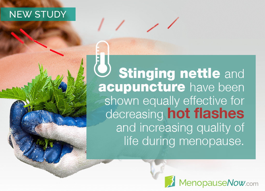 Study: Stinging nettle and acupuncture are effective for hot flashes
