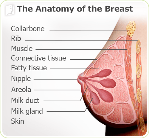 Breast Pain anatomy