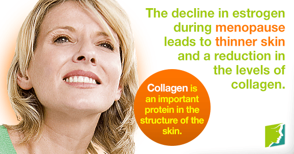 The decline in estrogen during menopause leads to thinner skin and a reduction in the levels of collagen