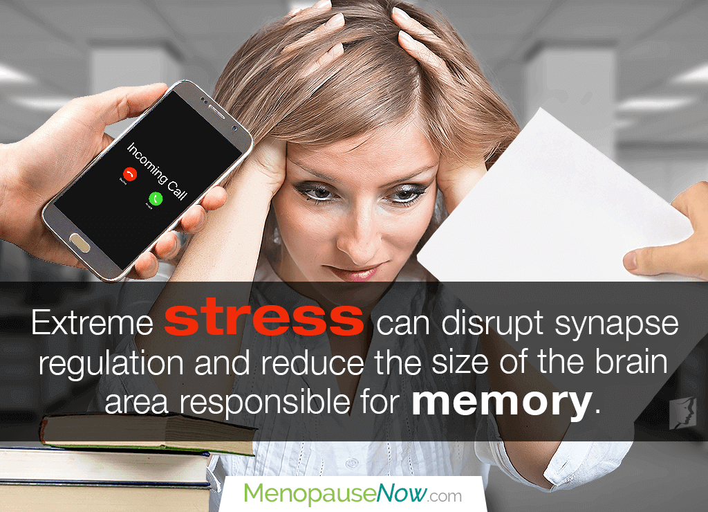 Memory Loss and Stress: The Relation