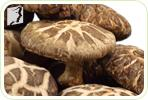 Eating Shiitake Mushrooms to Deal With Your Menopausal Fatigue