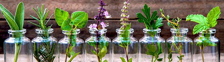 Alternative medicine for bloating treatment
