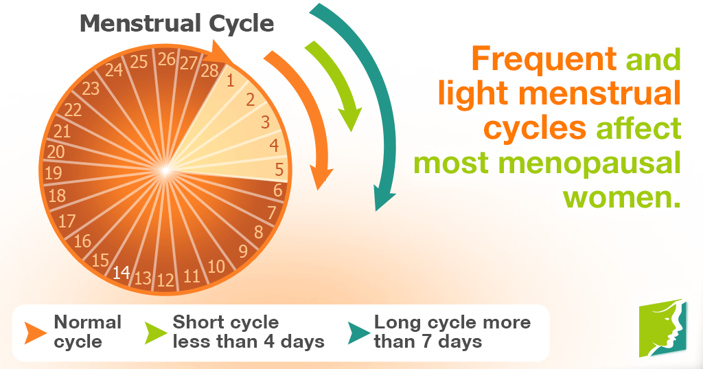 Frequent and light menstrual cycles affect most menopausal women.