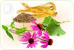 Herbal Remedies for Treating Fatigue during Menopause