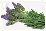 Holistic Treatment for Menopause Symptoms