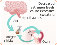 Decreased estrogen levels cause excessive sweating.
