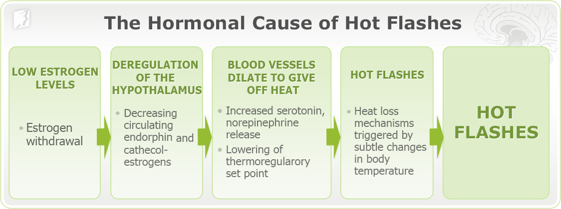 Diagram: Hot flashes hormonal causes