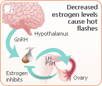Decreased estrogen levels cause hot flashes