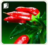 Spicy foods like red peppers are common hot flashes triggers