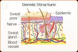 hot-flushes-follicle