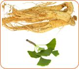 Ginkgo and ginseng: herbs used to treat memory loss