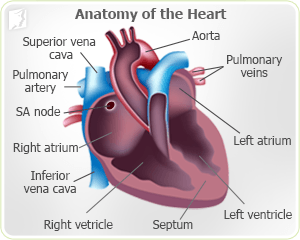 What are some treatments for a rapid heartbeat?