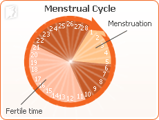 Menstrual cycle1