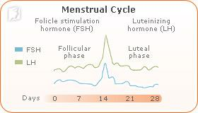 irregular-periods-follicle