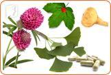 Natural remedies for loss of libido