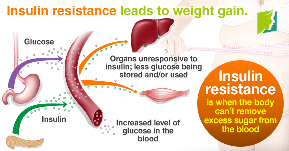 Insulin resistance leads to weight gain
