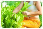 Menopausal Remedies