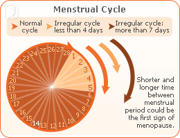Mentrual Cycle