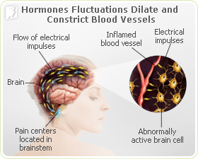 Hormone fluctuations can dilate and constrict blood vessels