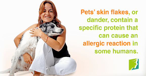 Pets' skin flakes, or dander, contain a specific protein that can cause an allergic reaction in some humans