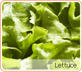 Lettuce: eating salad may help keep the body cool and avoid night sweats