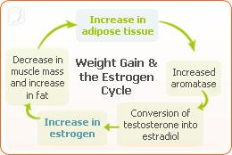 What Causes Weigh Gain during Menopause?1
