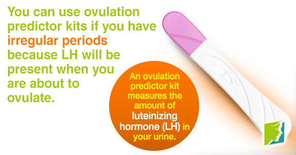 An ovulation predictor kit measures the amount of luteinizing hormone in your urine