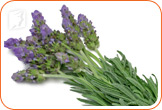 Lavender can relax muscles and soothe pain.